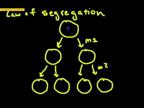Law of Segregation Made Easy