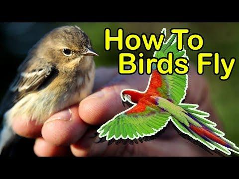 How To Birds Fly SL Kids Tv