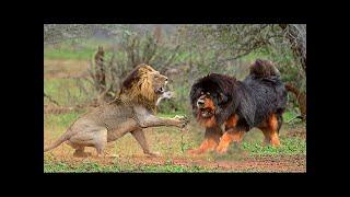 犬の所有者の人気の傾向は、他の動物、特に野生動物のように見える犬を...
