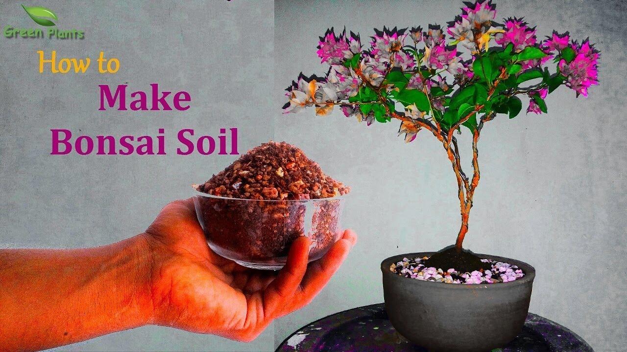 How To Make Bonsai Soil At Home Bonsai Soil For Beginners Bonsai Soil Mix Green Plants Youtube