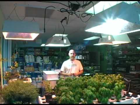 Plant grow light selection for indoor hydroponic gardening
