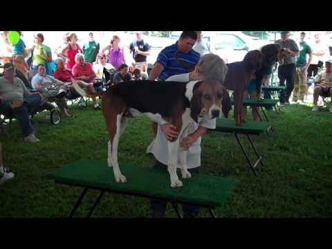 Saluda Coon Dog Days July 9th & 10th Saluda, NC