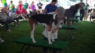 Saluda Coon Dog Days July 9th & 10th Saluda, NC