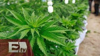 La despenalización de la marihuana / Opiniones encontradas