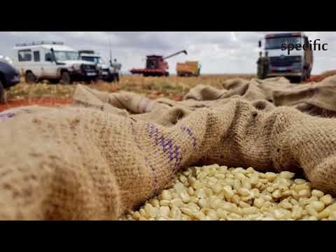 Maize farmers fight back as sector cartels reign supreme