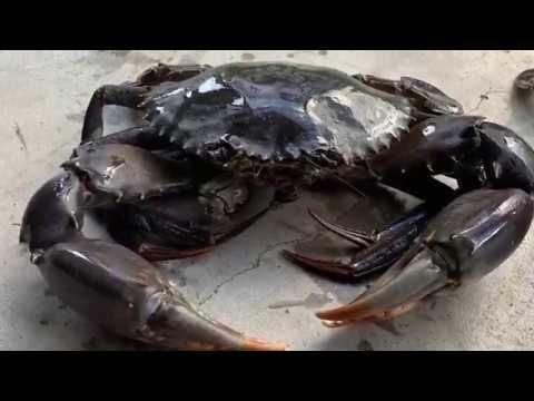 Crabbing At Tin Can Bay