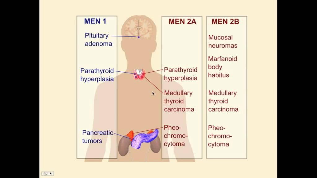 Endocrinology, Diabetes & Metabolism