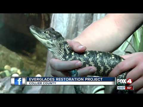 Rooney: Help is on the way for the Everglades