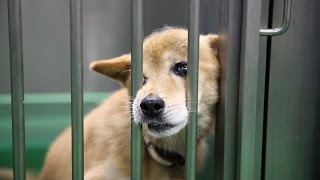 犬のしつけ方 パート5「殺処分の現状を理解しましょう!」 犬しつけ日本...