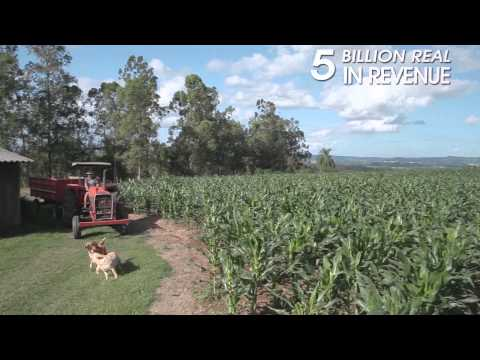Tobacco production in Brazil
