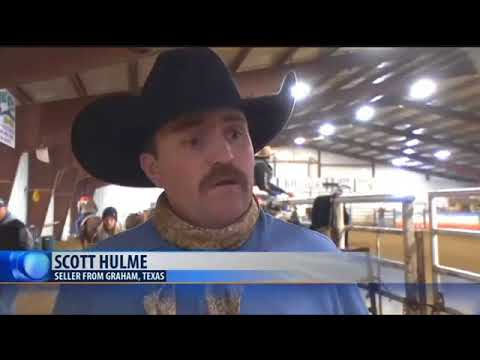 Billings Horse Sale