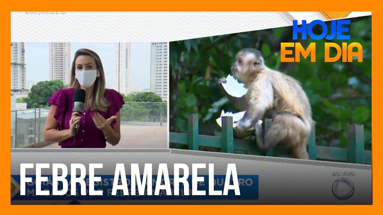 Goiás registra quarta morte de macacos por febre amarela em 2020