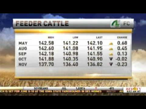 Look to be a Buyer in Cattle