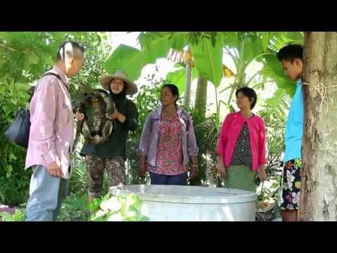 ฮือฮา !! ชาวนาสุรินทร์ บ้านหนองรี่ ต ทุ่งมน อ ปราสาท  จับเต่ายักษ์ 100 ปี สลักชื่อกระดองคล้องชื่อคนจ