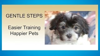 Havanese Puppy Potty Training Step by Step Potty Training Your Havanese Puppy House Training