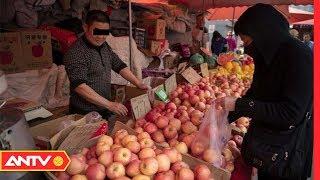 Táo đá Hà Giang: 100% là táo Trung Quốc | TPSHB | ANTV