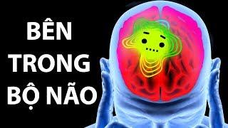 Hành Trình Bên Trong Bộ Não