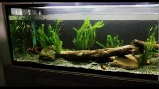 6ft aussie native aquarium display