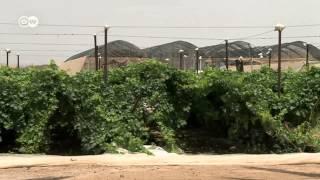 Agricultura en el desierto | Visión futuro