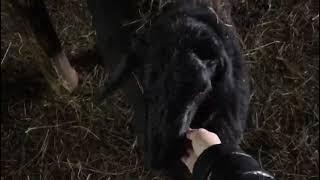 обзор жизни овец зимой