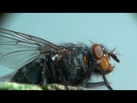 Why Is It So Hard to Swat a Fly?