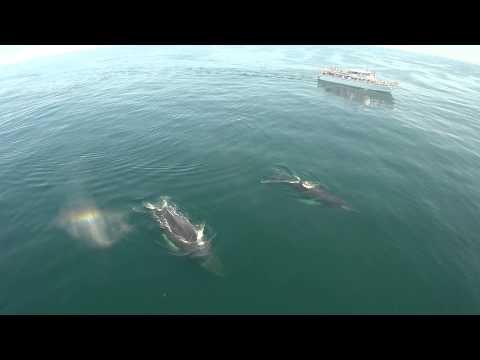 Cape Ann Whale Watch  Adventure