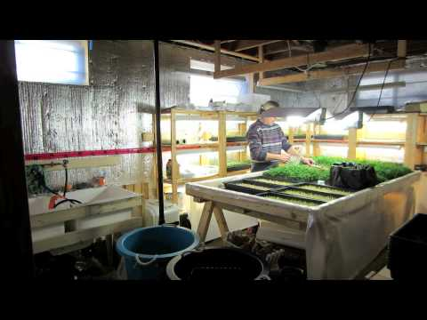 Wally 39 s grow rooms youtube Grow room designs