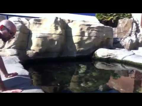 Birch Aquarium, San Diego, CA