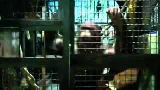 Клип к фильму Восстание планеты обезьян