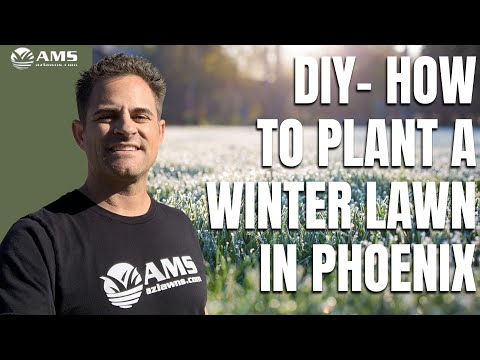 How to Plant Winter Grass in Phoenix