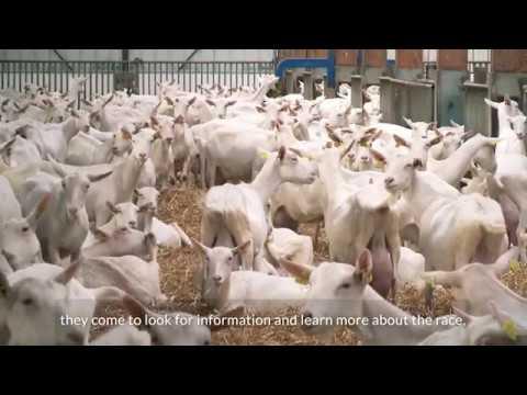 Вопрос: Как открыть козлиную ферму?