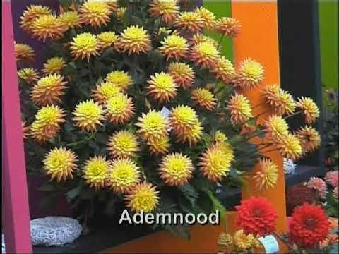 Linda,Roos en Jessica -  Ademnood ( KARAOKE ) Lyrics