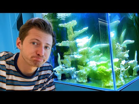 algenplage-im-meerwasser-aquarium-😱