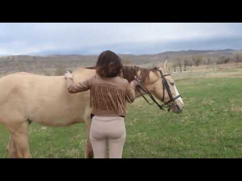 MY STALLION BREEDING FOR THE FIRST TIME! from YouTube · Duration:  9 minutes 17 seconds