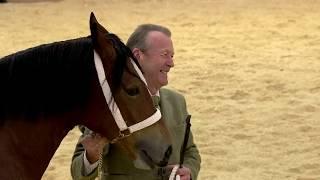 Pencampwriaeth ceffylau Cymreig   Welsh horse championship
