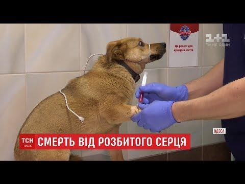 Єдиний друг: в Одесі чоловік помер після того, як побачив отруєним улюбленого пса