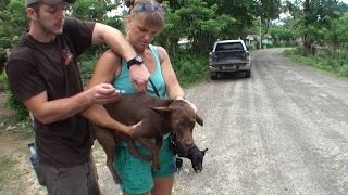 Vaccinating in Rural Dominican Republic