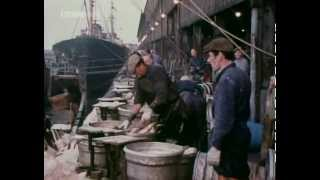 British Icelandic Cod Wars