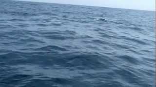 Tubarão na Barra da Tijuca?
