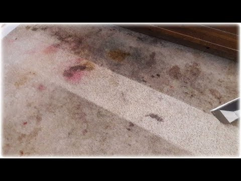 Carpet cleaning Natomas CA - Professional carpet cleaning realistic expectations