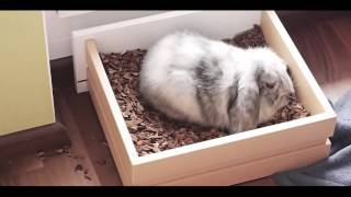 Kaninchen/Hasenstall Bau Tutorial