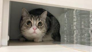 【悲報】パックして風呂から出てきたら猫に認識されずこうなりました…