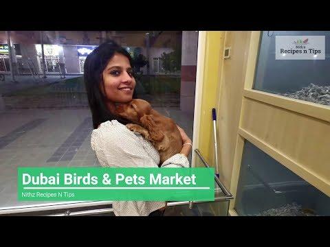 Dubai Birds And Pets Market | Biggest Pet Market In Dubai