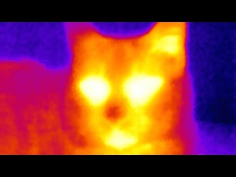 SEEK Thermal Camera Review: The Tricorder I