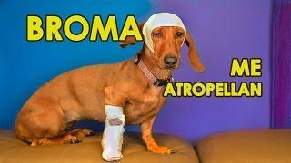 BROMA: ATROPELLARON A NUESTRA PERRITA |  | LOS POLINESIOS BROMAS PLATICA POLINESIA thumbnail