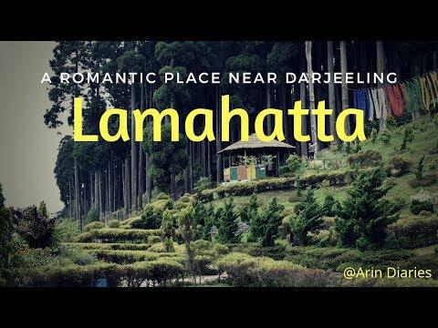 A Romantic place near Darjeeling - Lamahatta ||  Offbeat Destination ||  Darjeeling || North Bengal