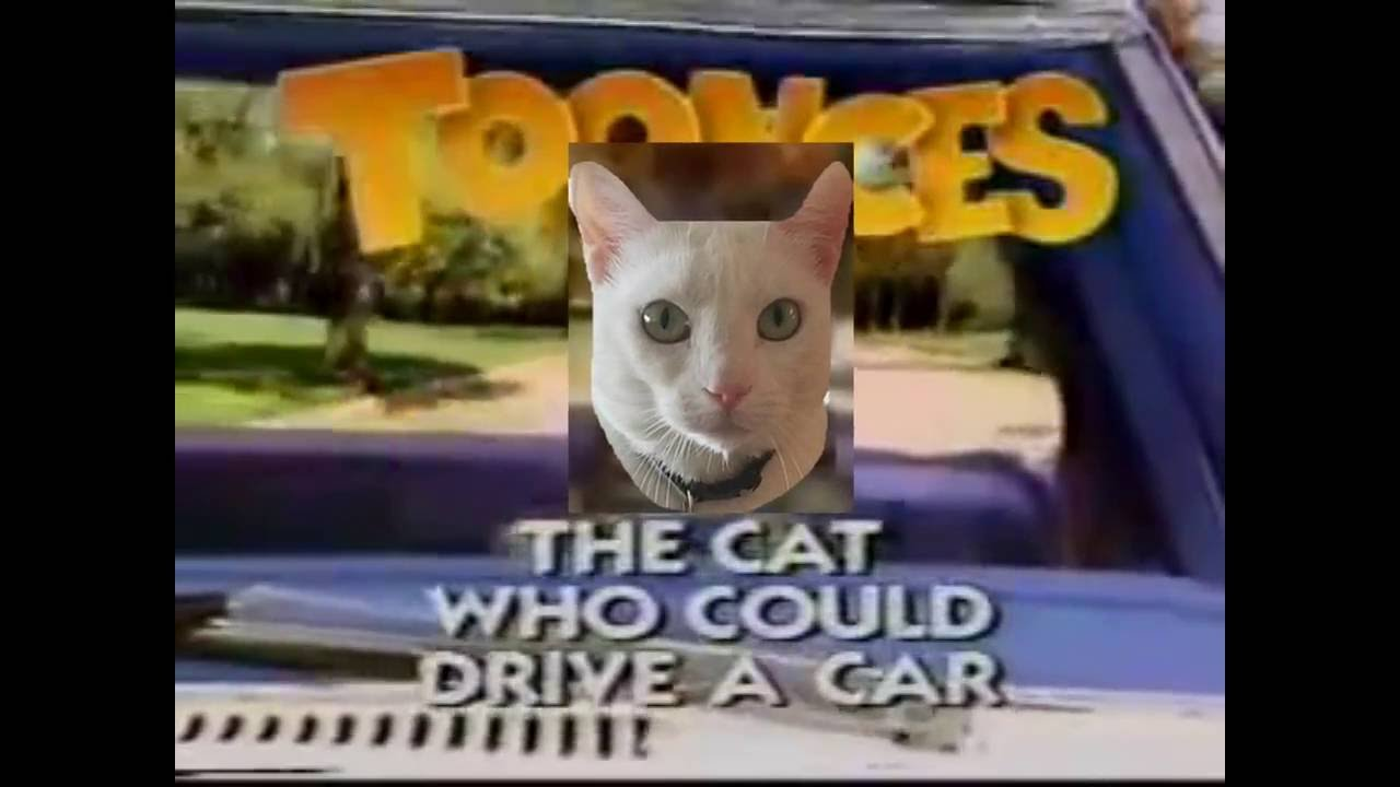 The Cat Who Could Drive A Car Youtube
