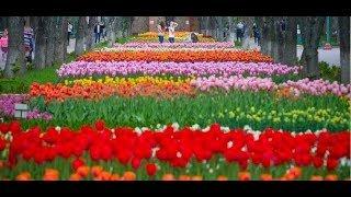 Куда поехать на майские праздники по Украине: топ-5 бюджетных решений отдыха
