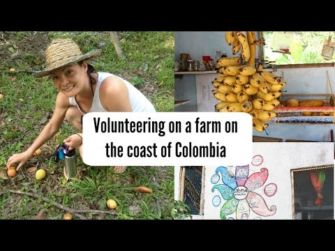 Volunteering on the coast of Colombia!