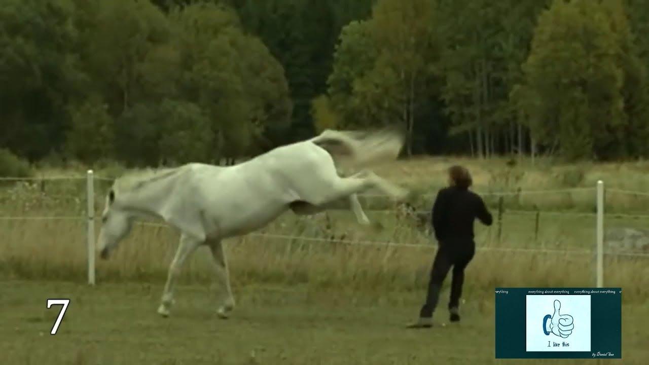 d3b02df7 Horse vs man, Compilation - YouTube